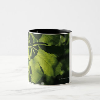 Green Seven Point Leaves with Sun Illumination Two-Tone Coffee Mug