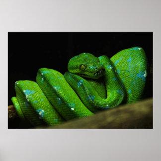 Green Snake in Captivity Poster