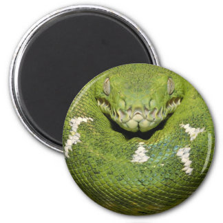 Green Snake Product Magnet