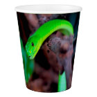 Green Snake Python Paper Cup