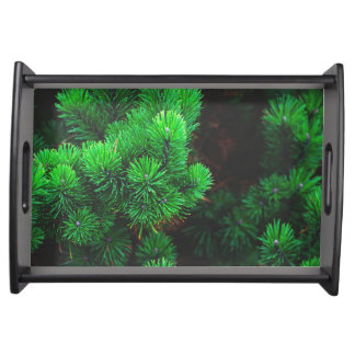 Green spruce branches serving tray