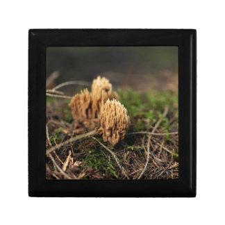 Green staining coral fungi (Ramaria abietina) Gift Box