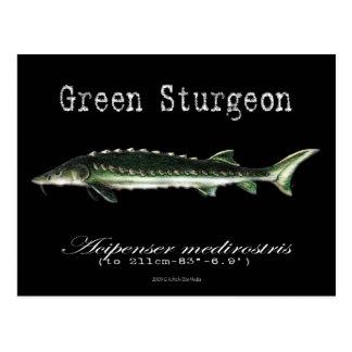 Green Sturgeon-Black-Postcard Postcard