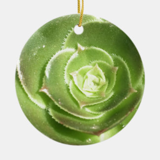 Green succulent ceramic ornament