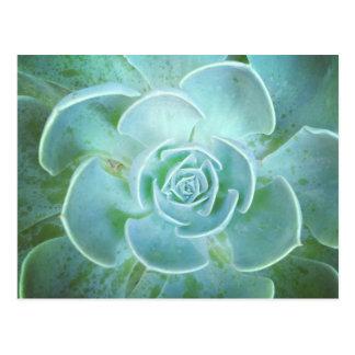 Green Succulent Closeup Postcard