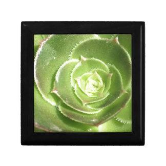 Green succulent gift box