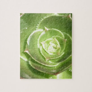 Green succulent jigsaw puzzle