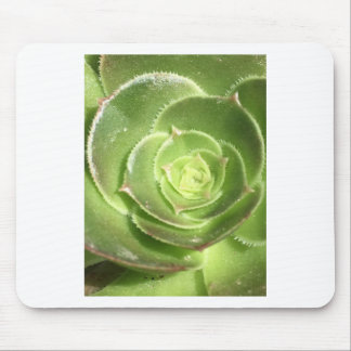 Green succulent mouse pad