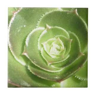 Green succulent tile