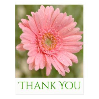 Green Thank You Pink Gerbera Daisy Flower Postcard