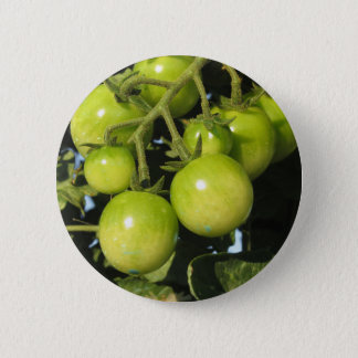 Green tomatoes hanging on the plant in the garden 2 inch round button