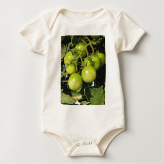 Green tomatoes hanging on the plant in the garden baby bodysuit