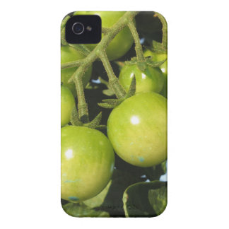 Green tomatoes hanging on the plant in the garden Case-Mate iPhone 4 cases
