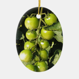 Green tomatoes hanging on the plant in the garden ceramic ornament