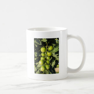 Green tomatoes hanging on the plant in the garden coffee mug
