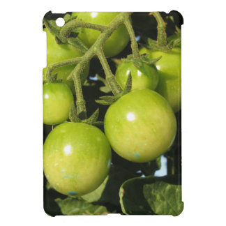 Green tomatoes hanging on the plant in the garden iPad mini case
