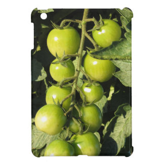 Green tomatoes hanging on the plant in the garden iPad mini cover
