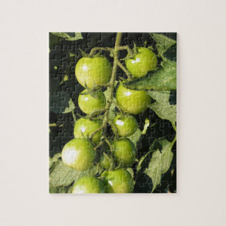 Green tomatoes hanging on the plant in the garden jigsaw puzzle