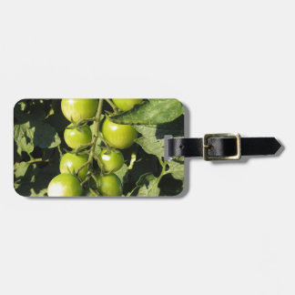 Green tomatoes hanging on the plant in the garden luggage tag