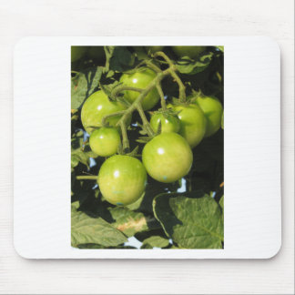 Green tomatoes hanging on the plant in the garden mouse pad