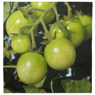 Green tomatoes hanging on the plant in the garden napkin