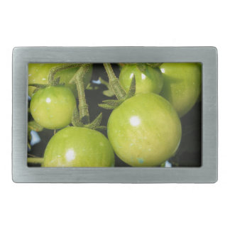 Green tomatoes hanging on the plant in the garden rectangular belt buckle