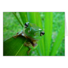 Green Tree Frog Blank Card