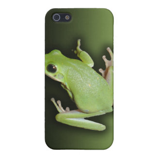 Green Tree Frog Case For iPhone 5/5S