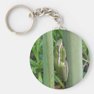 Green Tree Frog (Hyla cinera) Key Chain