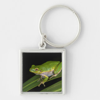 Green Tree Frog (Hyla cinerea) 2 Silver-Colored Square Keychain