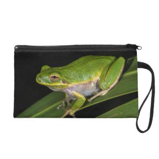 Green Tree Frog (Hyla cinerea) 2 Wristlet Purse