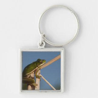 Green Tree Frog Hyla cinerea) Little St Key Chain