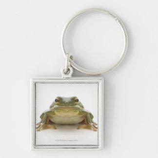 Green tree frog (Hylidae cinerea) Keychain