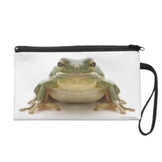 Green tree frog (Hylidae cinerea) Wristlet