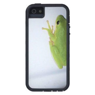 Green Tree Frog iPhone 5 Cover