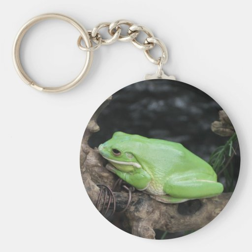 Green Tree Frog Key Chain