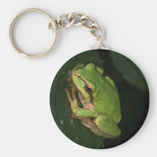 Green Tree Frog Keychain