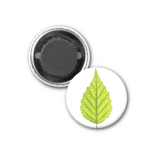 Green tree leaf fridge magnet