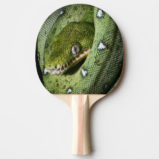 Green tree snake emerald boa in Bolivia Ping-Pong Paddle