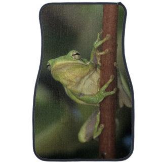 Green Treefrog, Hyla cinerea, adult on yellow Car Mat