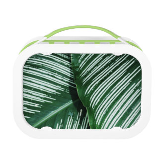 Green Tropical Leaves with White Stripes Closeup Lunch Box