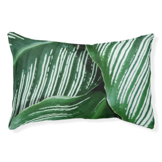 Green Tropical Leaves with White Stripes Closeup Pet Bed