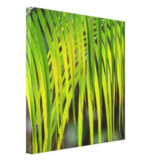Green Tropical Palm Tree in Hawaii Canvas Print