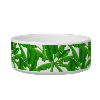 Green tropical palm trees bowl