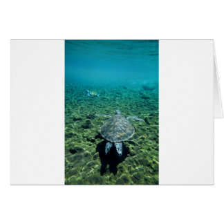 Green turtle underwater Western Samoa Card