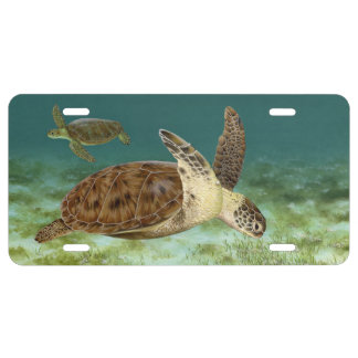 Green Turtles in Habitat License Tag License Plate