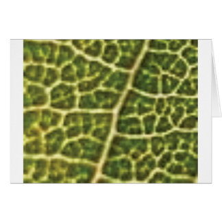 green veins or scales card