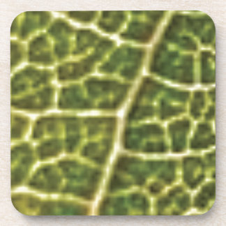 green veins or scales coaster