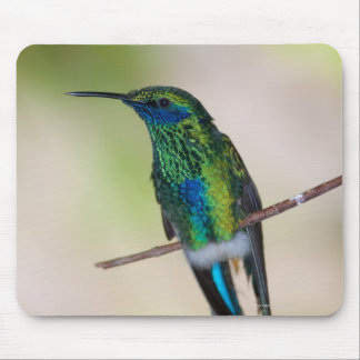 Green Violet-ear Hummingbird Mouse Pad