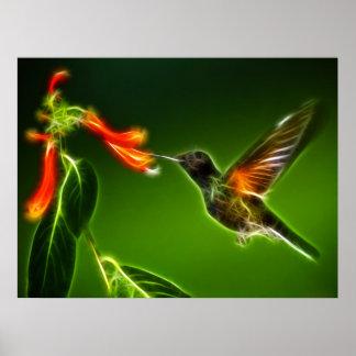 Green Violetear Hummingbird Poster